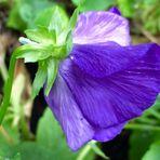 Eine zarte Blüte für Euch