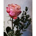 Eine zarte Rose zum Wochenende