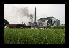 Eine Zuckerrohrfabrik ...