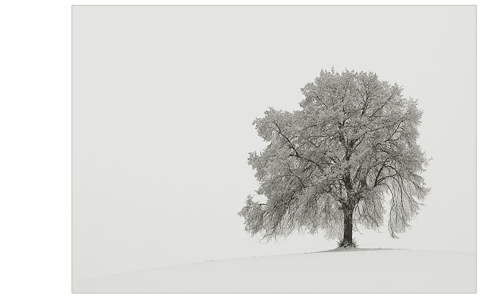 Einen Baum...