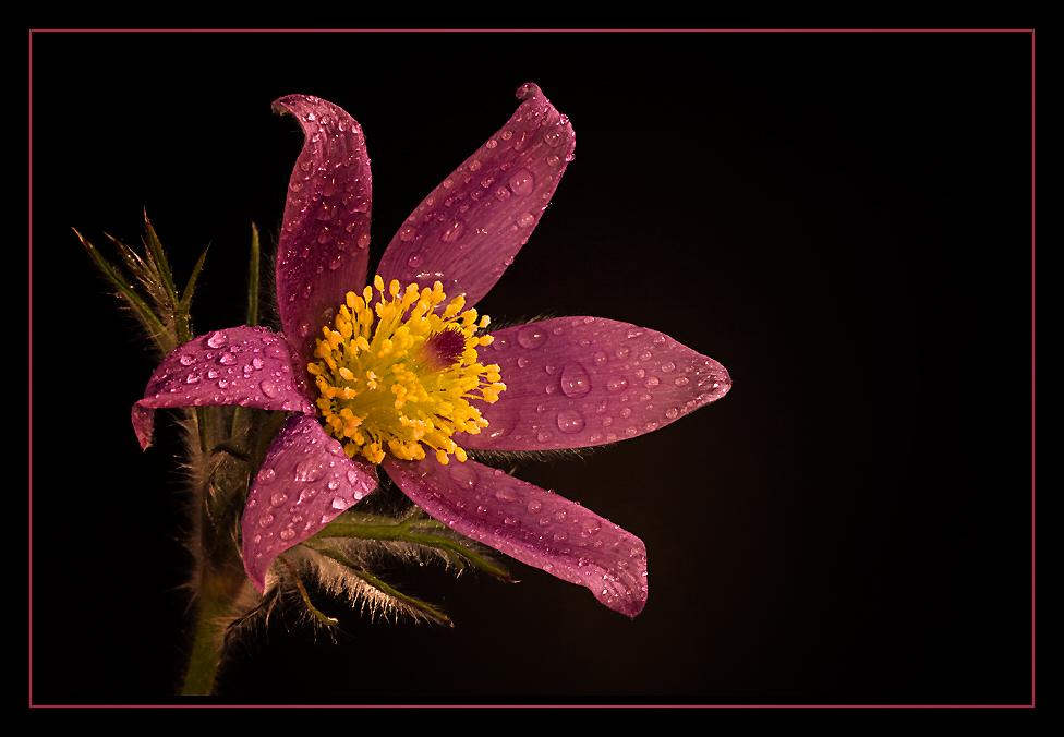 Einen Blumengruß