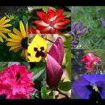 Einen Blumengruß an Euch alle
