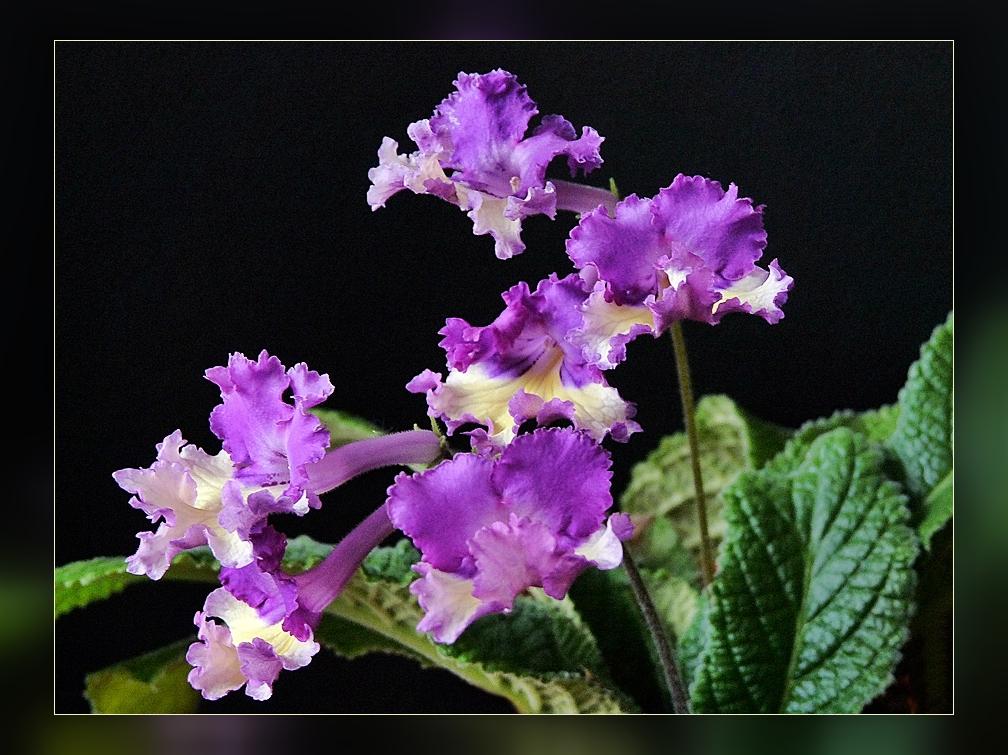 einen blumigen Sonntagsgruss in lila