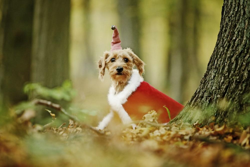 Einen fröhlichen Nikolaus .....