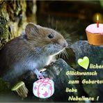 Einen lieben Geburtstagsgruß....