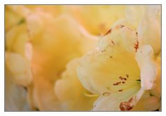einen Rhododendron hab ich noch