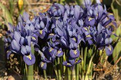 Einen schönen Frühlingsgruß!