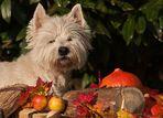 Einen schönen Herbst....