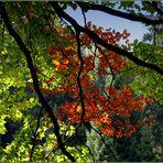 Einen schönen Herbstanfang...
