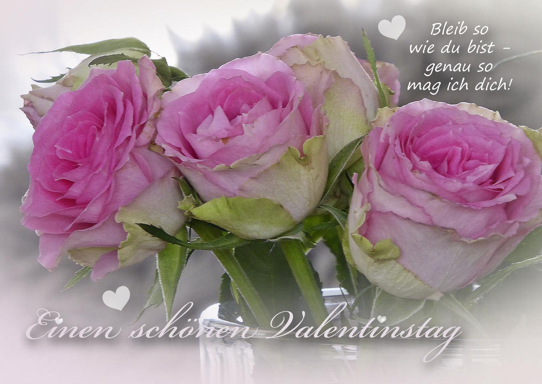 Einen Schönen Valentinstag Foto Bild Spezial Rosa Rosen Bilder
