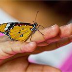 Einen so zahmen Schmetterling…