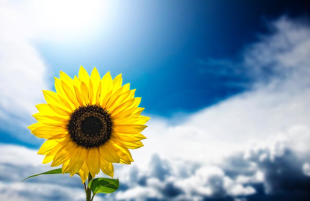 Einen sonnigen Tag wünsche ich Euch