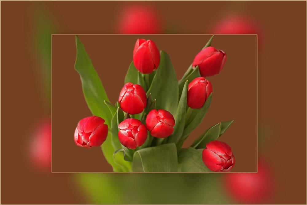 Einen Tulpen......