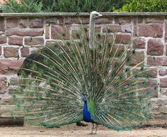 Einen Vogel mit zwei Köpfen :-)
