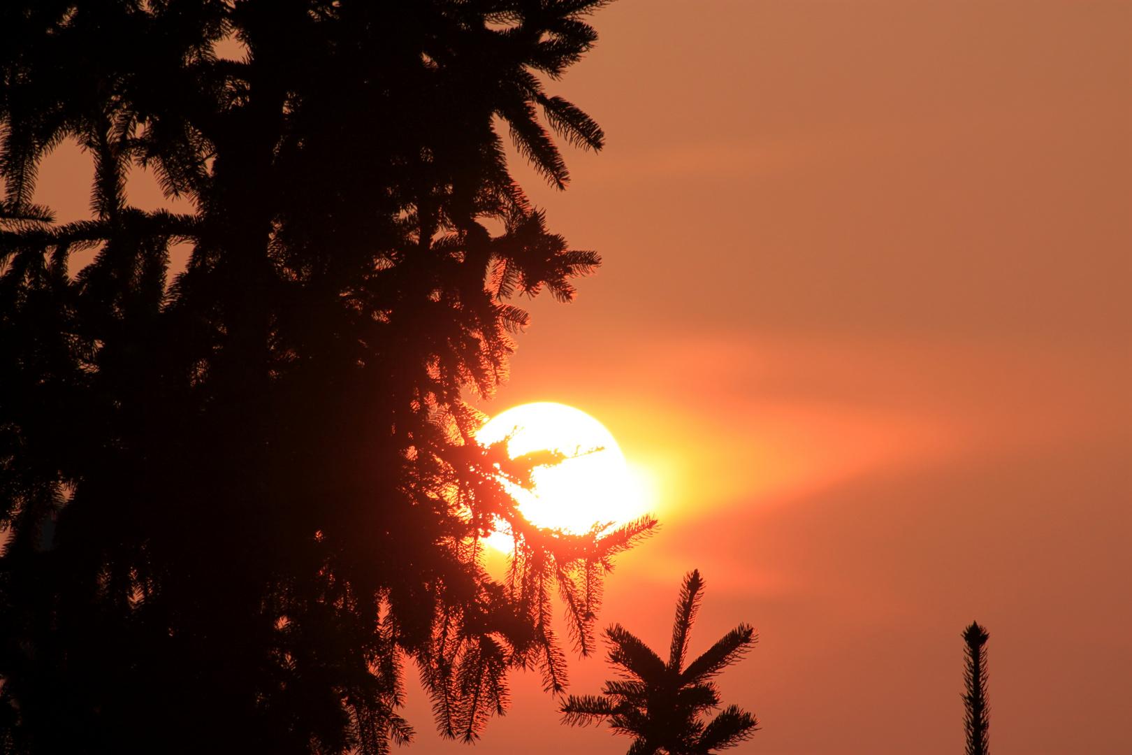 Einen Wundervollen Guten Morgen An Alle Foto Bild