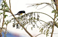 einer der farbenprächtigsten vögel in egypten