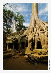 Einer der meist fotografierten Bäume der Welt