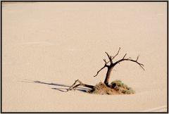 Einer der toten Bäume im Dead Vlei