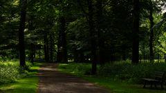 Einer der vielen Wege durch den Tiergarten Hannover