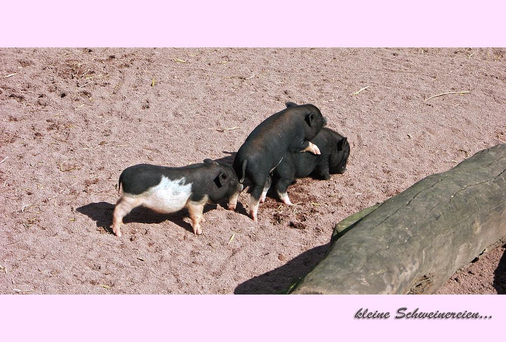 ...einer ist immer das arme Schwein