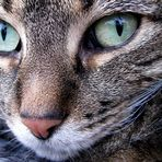 Einer Katzen Augen sind Fenster