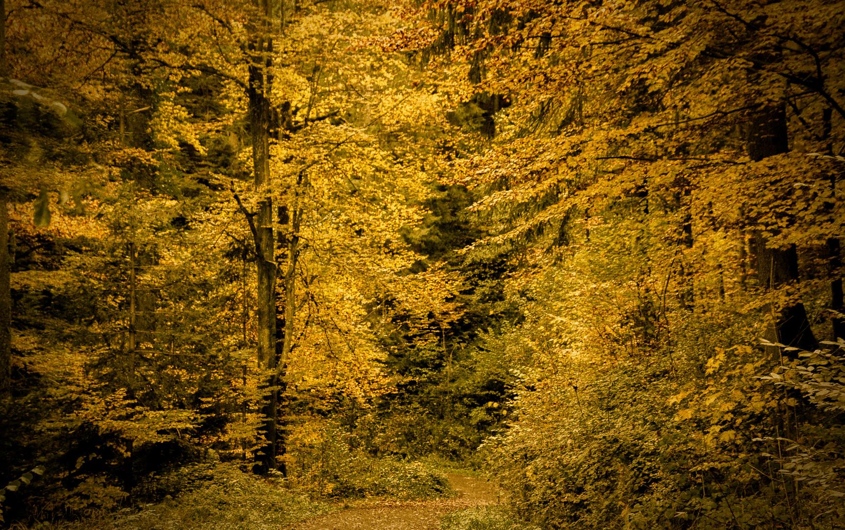 Einer meinen vielen Waldwege