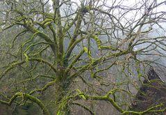 Einer meiner Lieblingsbäume