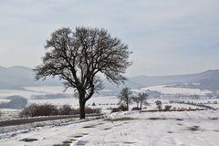 Einer meiner Lieblingsbäume zu Weihnachten 2012