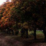 Einer nach dem Anderen... Bäume im Herbst