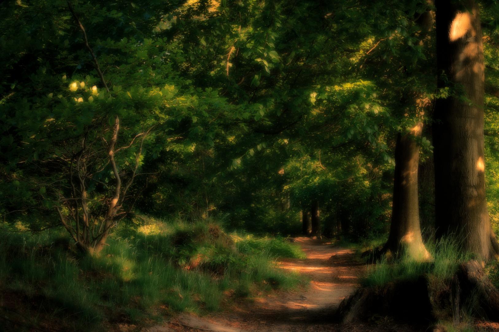 Einer über X.000  Waldwege in der Ohligser Heide