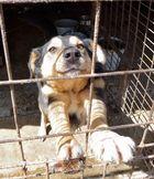 Einer von 3800 vergessenen Hunden im größten Tierheim der Welt