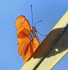 Einer von mehr als Tausend Schmetterlingsarten in Costa Rica.