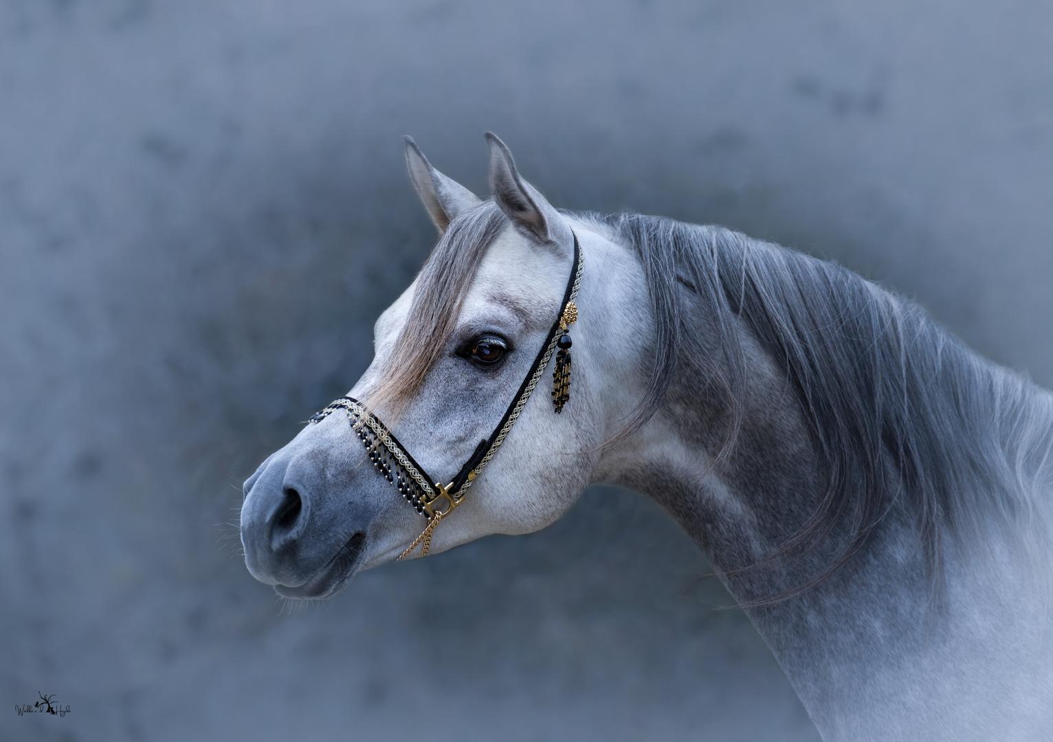 Eines der schönsten Pferde die ich bisher gesehn habe.
