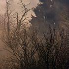 Eines Morgens im Nebel ...