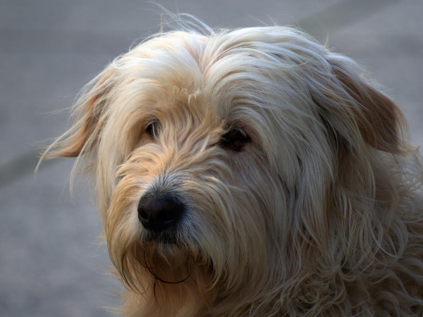 einfach ein schönes Hundeportrait