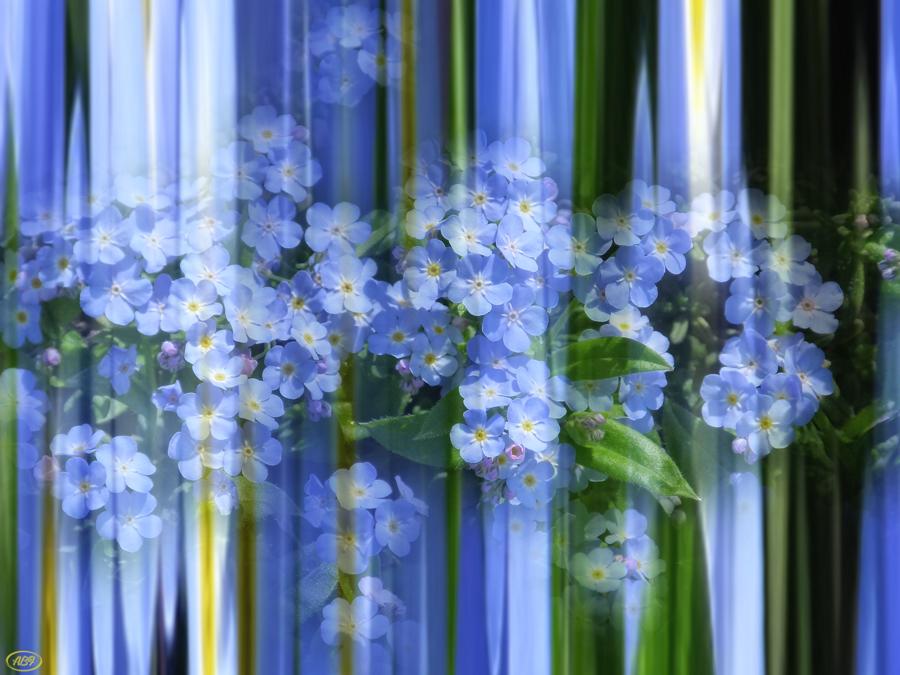 Einfach Frühling...2