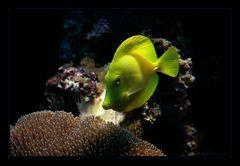 Einfach gelb :-)
