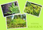 einfach grün