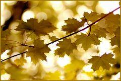 Einfach - Herbst