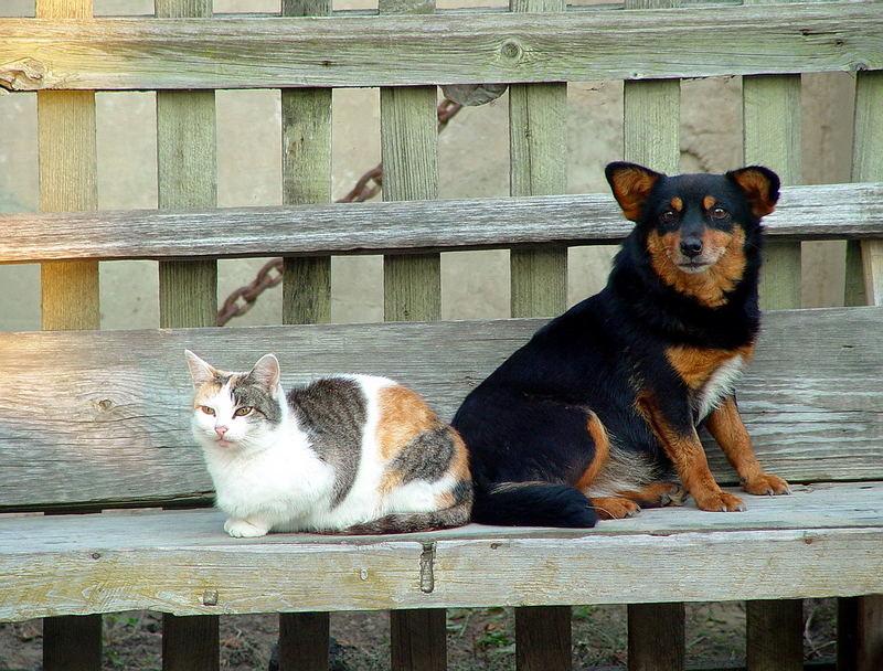Einfach Hund und Katze