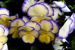 Einfach mal in den Blumenkasten reingehalten die Linse
