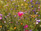 Einfach Naturblumen