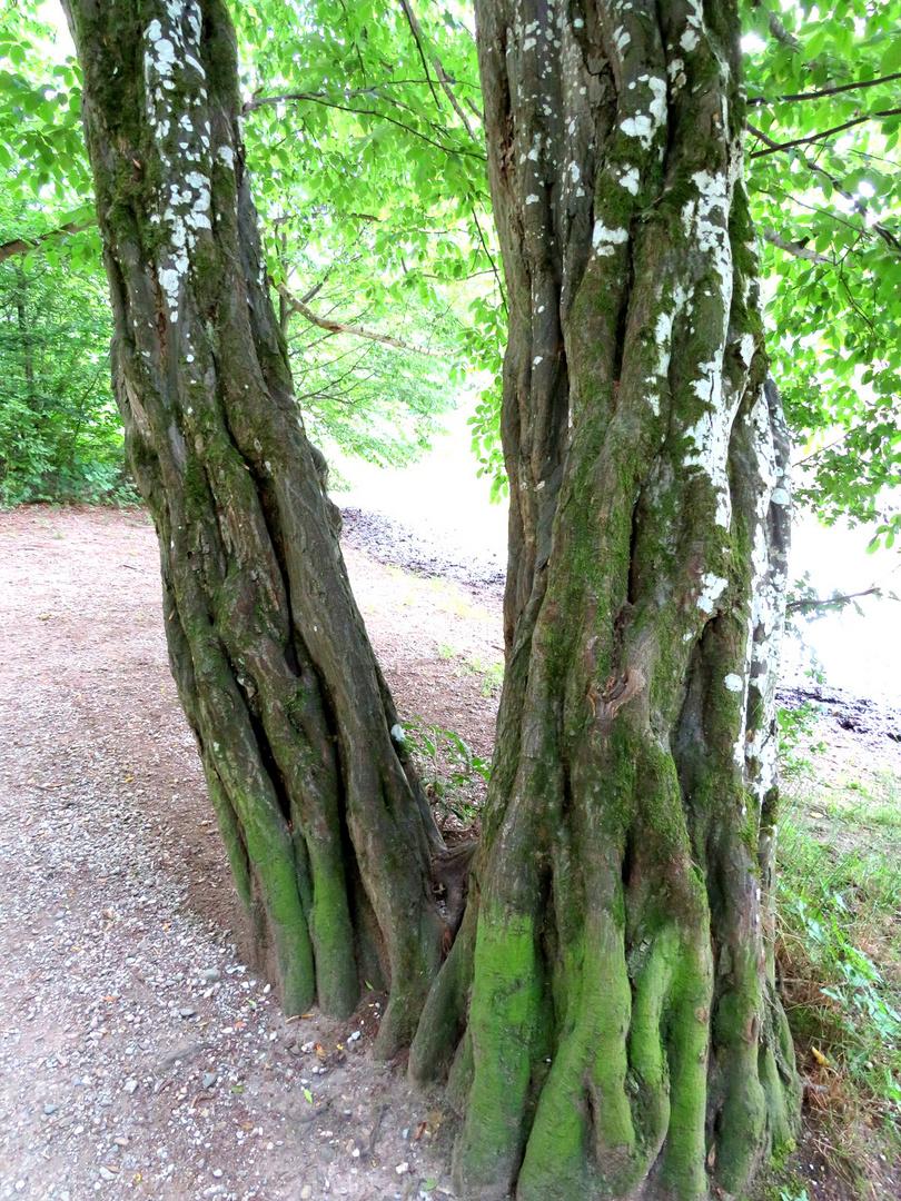 Einfach nur Bäume