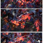 Einfach nur Blätter...I