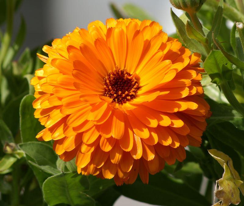 Einfach nur Blume