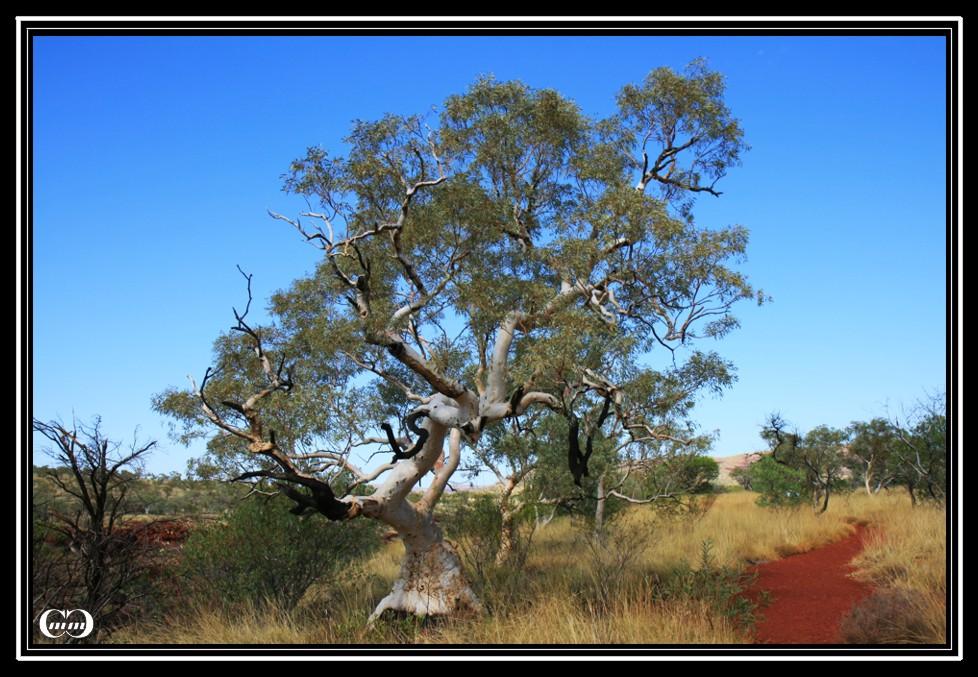 Einfach nur ein Baum....