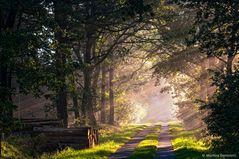 ... einfach nur ein Waldweg