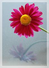 einfach nur eine Blüte ....