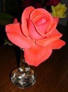 einfach nur meine Lieblingsblume