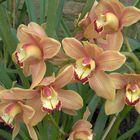 einfach nur orchideen